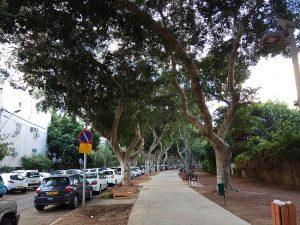 עצים בתל אביב
