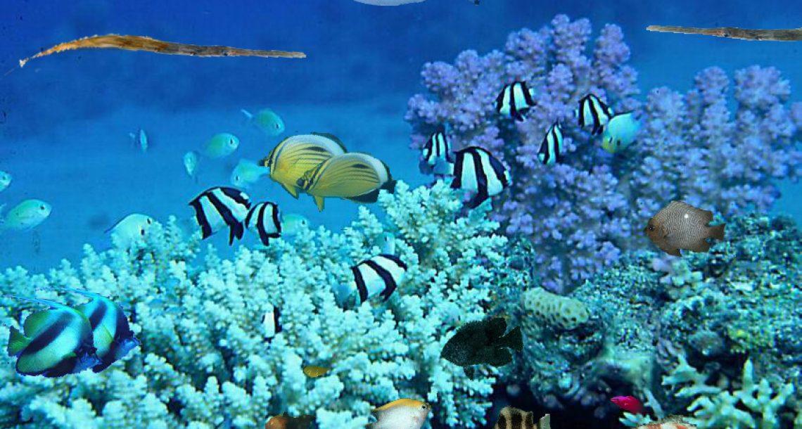"""""""צלול"""" מבקשת מרט""""ג: דרשו למנוע שימוש במסנני קרינה הפוגעים באלמוגים"""