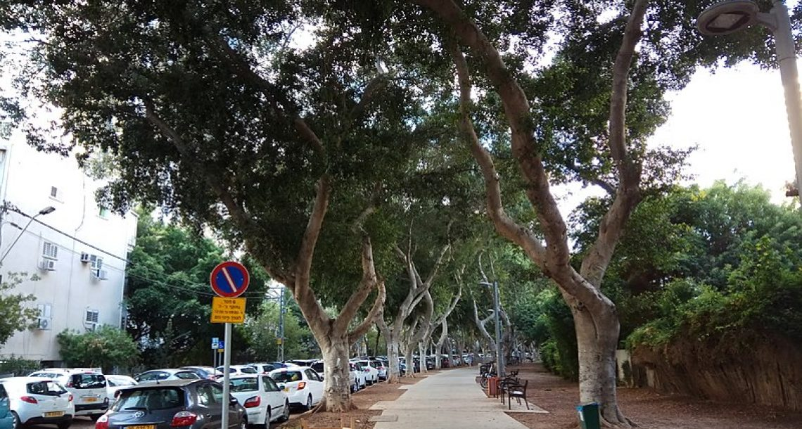 ארגוני הסביבה לחולדאי: אין לכרות עצים עד לתחילת העבודות על הרכבת הקלה