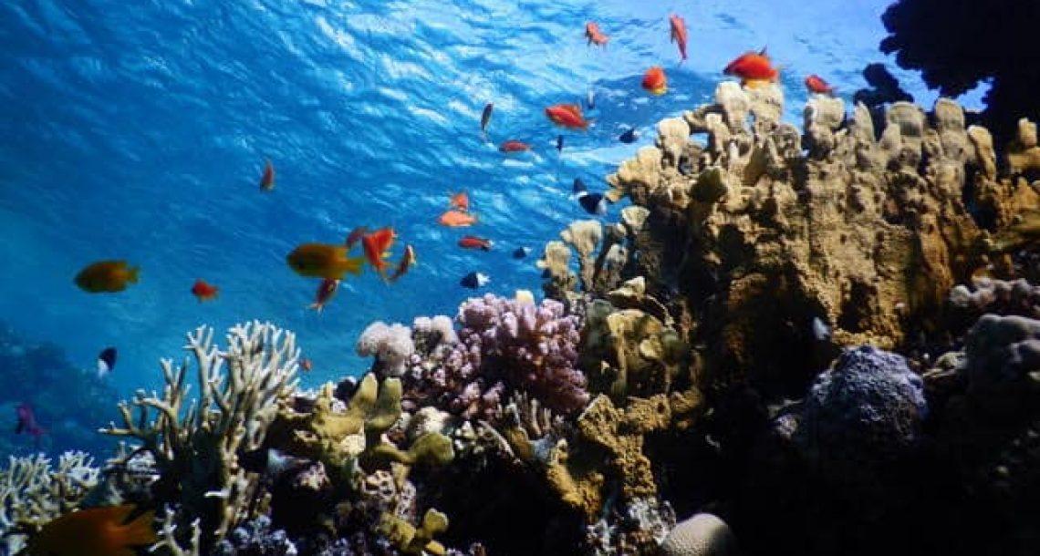 """""""צלול"""" למשרד הבריאות: המליצו על תכשירי הגנה שאינם פוגעים באלמוגים"""