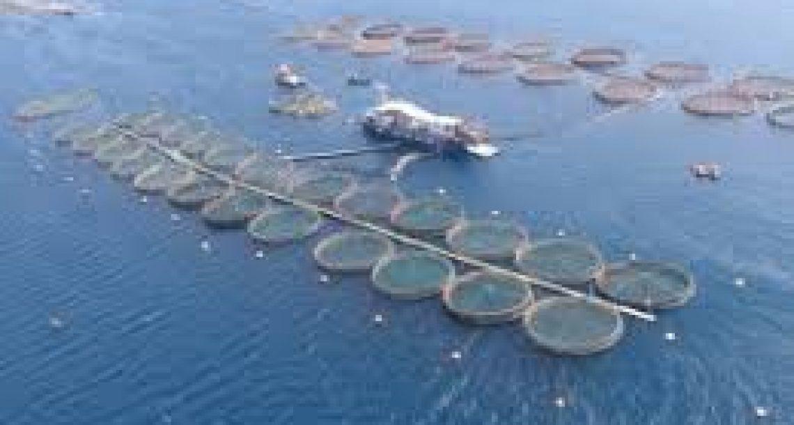 סגירת כלובי הדגים במפרץ אילת – תולדות המאבק