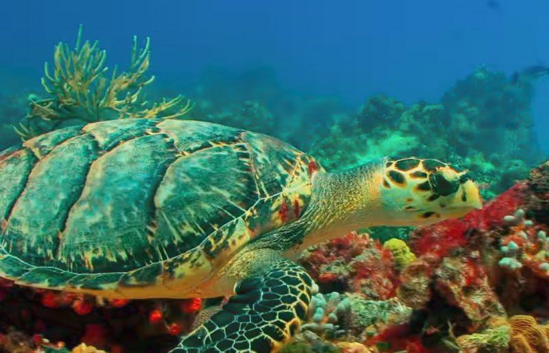 דגים, דגים, דגים – כתבה בירחון טבע הדברים